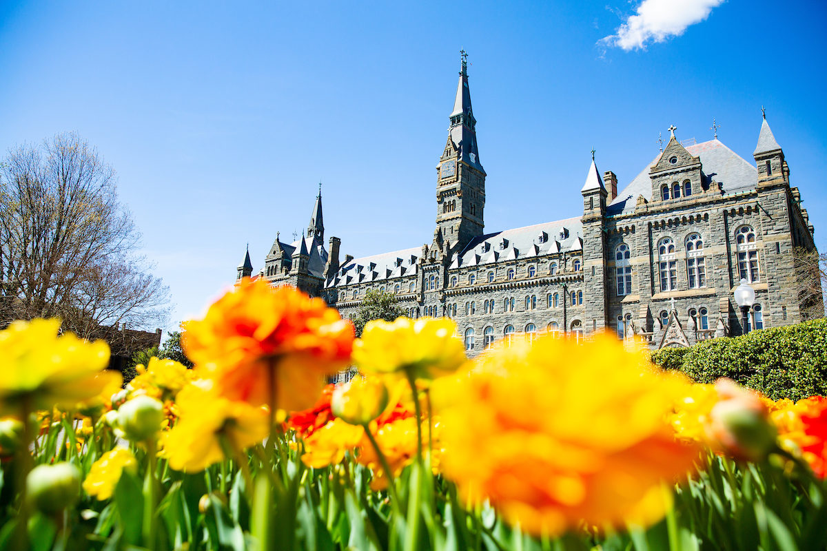 Healy Hall with yellow flowers in front of it